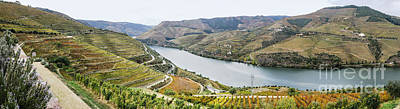 Winery Photograph - Terraced Vineyards In Autumn by Oscar Gutierrez