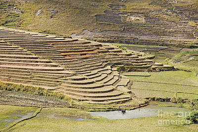 Photograph - Terraces And Paddy Fields by Liz Leyden
