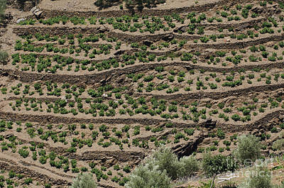 Andalucia Photograph - Terracing In Andalucia by Rod Jones