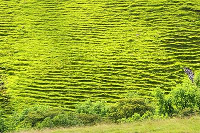 Terracing Photograph - Terracing On A Steep Slope by Ashley Cooper