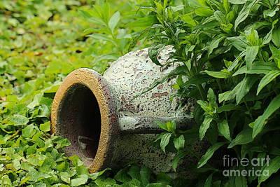 Terracotta Vase In The Green Art Print by Amanda Mohler