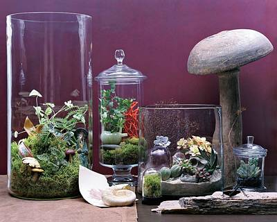 Purple Mushroom Photograph - Terraiums by Dana Gallagher