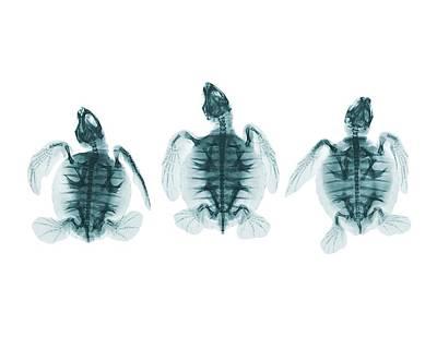 Trio Photograph - Terrapins by Brendan Fitzpatrick