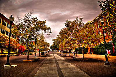 Terrell Photograph - Terrell Mall On The Washington State Campus by David Patterson