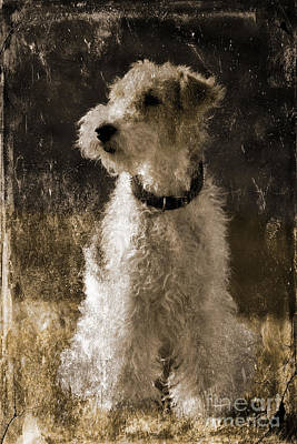 Photograph - Terrier Antique by Lutz Baar
