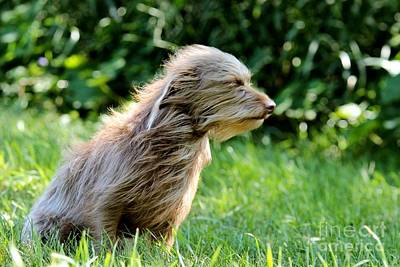 David Bowie - Terrier in the Wind by Janice Byer
