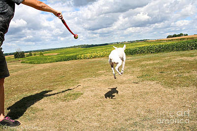 Photograph - Terrier Levitation by Susan Herber