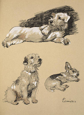 Puppy Drawing - Terriers, 1930, Illustrations by Cecil Charles Windsor Aldin