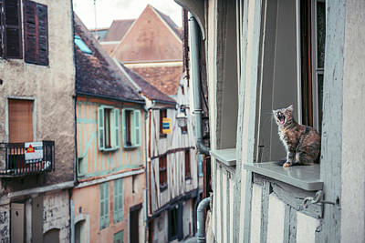 Cute Kitten Photograph - Territory by Timothy Entropy