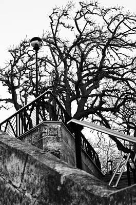 Street Photograph - Horrific Tree For A  Witches Night by Pedro Cardona Llambias