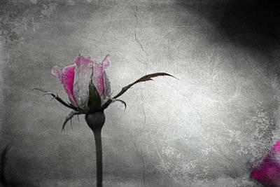 Mixed Media - Tess's Rose by Trish Tritz