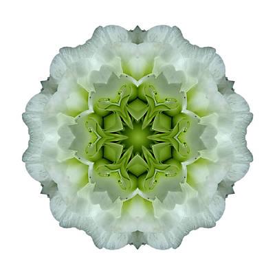 Photograph - White And Green Begonia I Flower Mandala White by David J Bookbinder