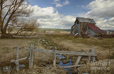 Photograph - Test Of Time by Idaho Scenic Images Linda Lantzy