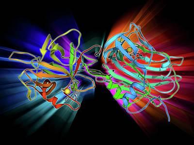 Toxin Photograph - Tetanus Toxin C-fragment Molecule by Laguna Design