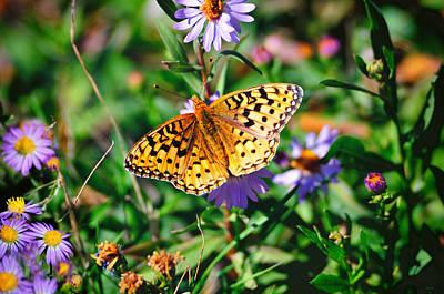 Teton Butterfly Art Print