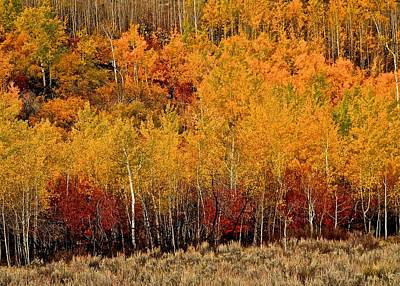 Photograph - Teton Canyon Fall Colors by Eric Tressler