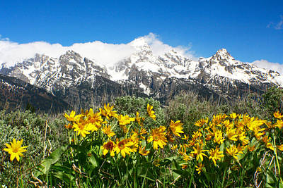 Photograph - Teton Wildflowers 3 by Jon Emery