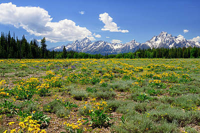 Photograph - Teton Wildflowers Along Pilgrim Creek Meadows by Greg Norrell