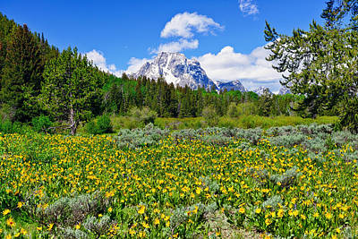 Photograph - Teton Wildflowers by Greg Norrell