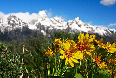 Photograph - Teton Wildflowers by Jon Emery