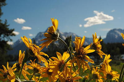 Photograph - Teton Wildflowers by Robert  Moss