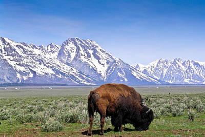 Photograph - Tetons Buffalo Range by Douglas Barnett