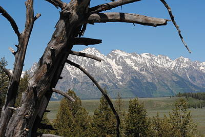 Photograph - Tetons Framed by Robert  Moss