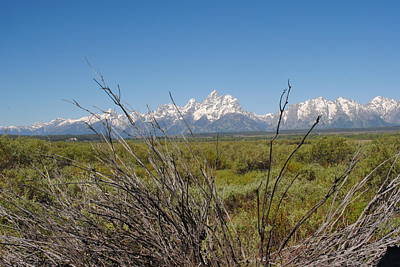 Photograph - Tetons Through Brush by Robert  Moss