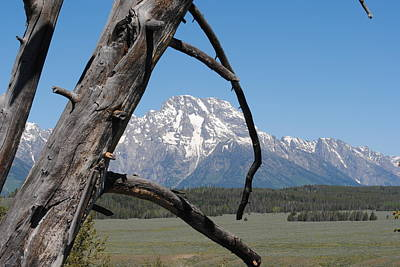 Photograph - Tetons Through Old Tree by Robert  Moss