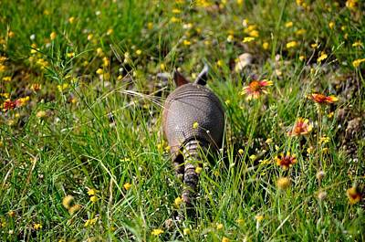 Photograph - Texas Armadillo II by Kristina Deane