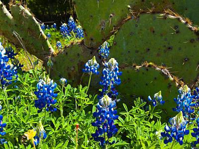 Texas Blue Bonnets Art Print by Mark Weaver