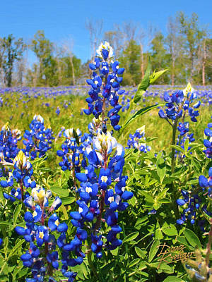 Digital Art - Texas Bluebonnet by Doug Kreuger