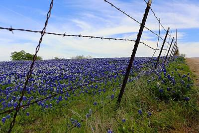 Digital Art - Texas Bluebonnet Field by Carrie OBrien Sibley
