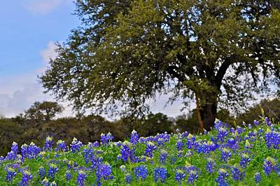 Photograph - Texas Bluebonnet Field by Kristina Deane