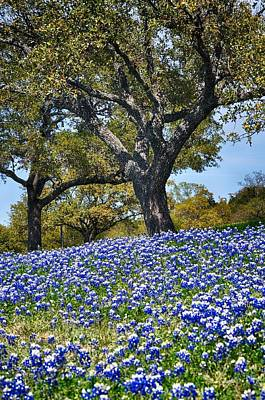 Photograph - Texas Bluebonnet Hill by Kristina Deane