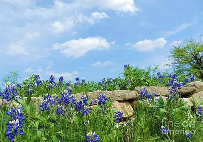 Texas Bluebonnets 08 Art Print