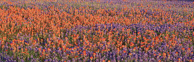 Texas Bluebonnet Wildflowers Landscape Flowers Spring Photograph - Texas Bluebonnets And Indian by Panoramic Images