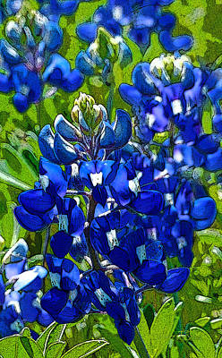 Texas Bluebonnets - Posterized Image Art Print by Robert J Sadler