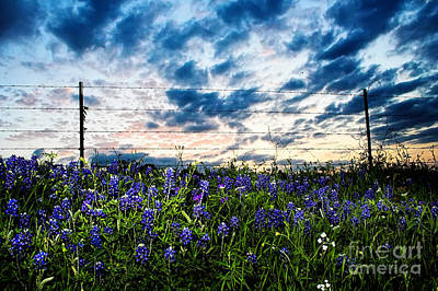Texas Bluebonnet Wildflowers Landscape Flowers Spring Photograph - Texas Blues by Katya Horner