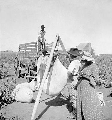 Cotton Fields Painting - Texas Cotton Field, C1904 by Granger