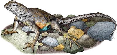 Photograph - Texas Earless Lizard by Roger Hall