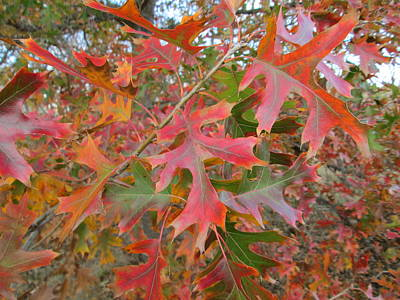 Photograph - Texas Fall Colors by Rosalie Klidies