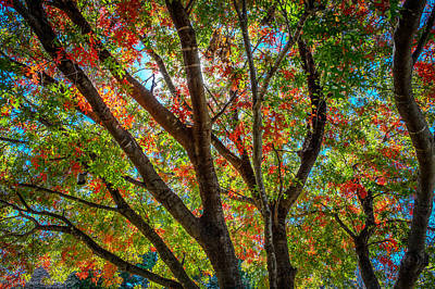 Art Print featuring the photograph Texas Fall Glory by Ross Henton