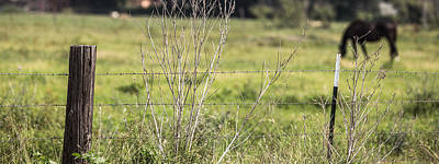 Photograph - Texas Fence And Horse by John McGraw