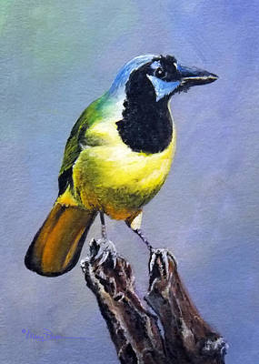 Painting - Texas Green Jay by Mary Dove