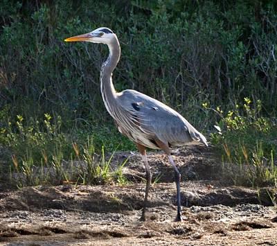 Photograph - Texas Coastal Birds by Kristina Deane