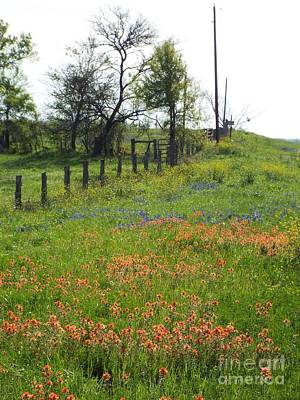 Photograph - Texas Hill Country by Audrey Van Tassell