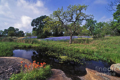 Landscapes Royalty-Free and Rights-Managed Images - Texas Hill Country - FS000056 by Daniel Dempster