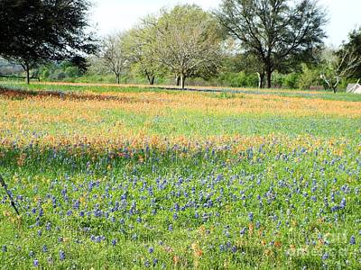 Photograph - Texas Hill Country Springtime by Audrey Van Tassell