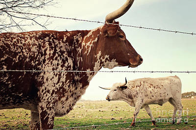 Strong America Photograph - Texas Longhorn Cattle by Trish Mistric